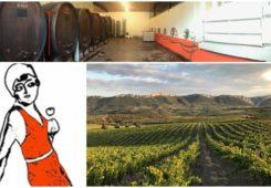 Opération vente de vins natures